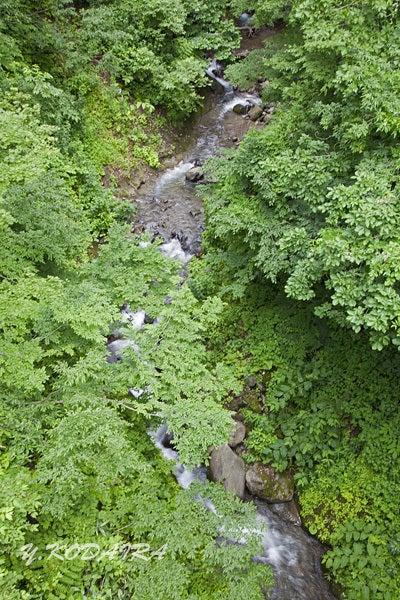 深緑と流れ