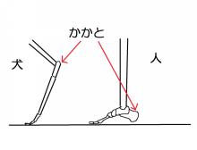人の足・犬の足