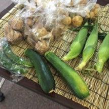 夏野菜収穫♪