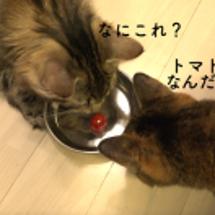 猫とさくらんぼ