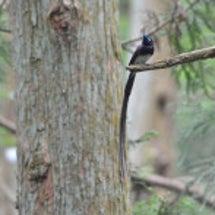 青い目の鳥