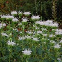 白い花と青い花
