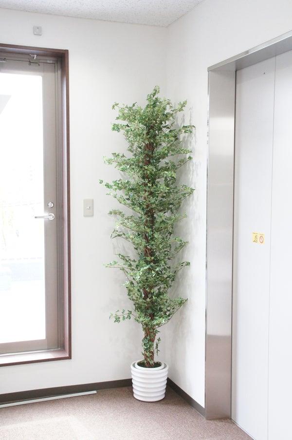 エレベーターホールにグリーン