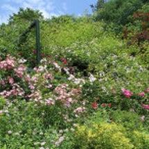 6月のお庭5