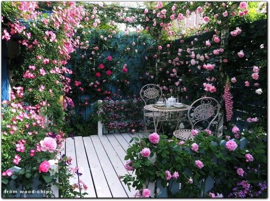 バラの庭 写真 ブログ