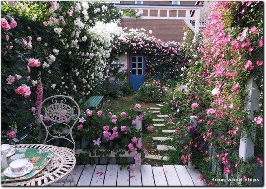 バラの庭 写真 ガーデンカフェ