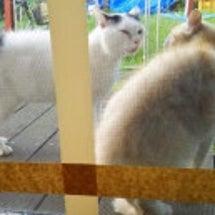 猫の会話と、中島美嘉…