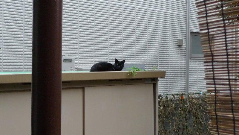 真っ黒黒猫