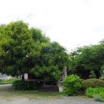 「米沢 関興庵・観音…