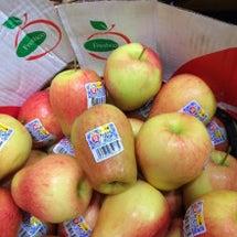 新種のリンゴ