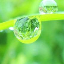 きらきら水滴と蝶々の…