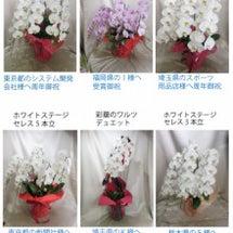 6/28 本日の胡蝶…