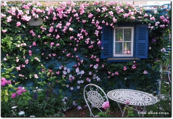 バラの庭 写真