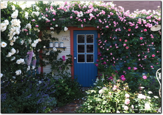 バラの庭 写真ブログ