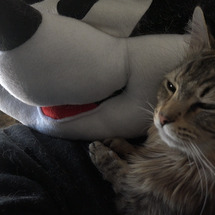 遊び疲れた猫たち