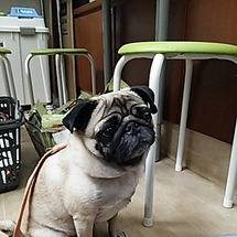 GREEN DOGよ…
