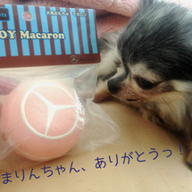 おべんつのマカロ〜ン…
