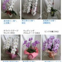 6/30 本日の胡蝶…