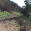 女川柚子農園始めまし…