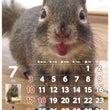 7月の俵太カレンダー