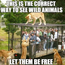 野生の動物を見る正し…