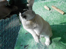 湘南車検センターウサギ