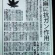 芸能人使って大麻撲滅…