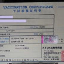ワクチン痛かぁ~!