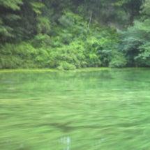 アオコと藻では雲泥の…