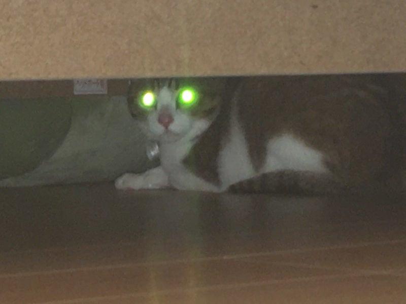 猫 レンゲ君