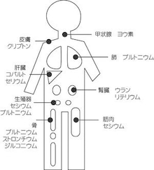 各種放射性物質が溜まる臓器