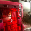 ソラ君、日本の猫にな…