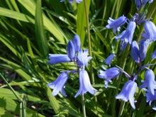 きれいなブルーの花