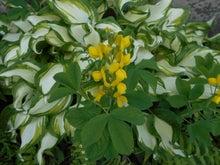 黄、緑、白のコントラスト