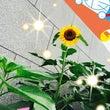 元気の花!(^^)!