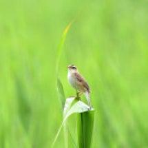 久しぶりに鳥を見に