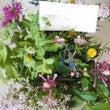 ハーブの花束と7月の…