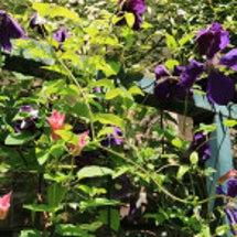 7月のお庭1