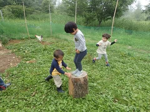 ニワトリの庭で遊ぶ