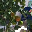 接骨院の花、野菜たち