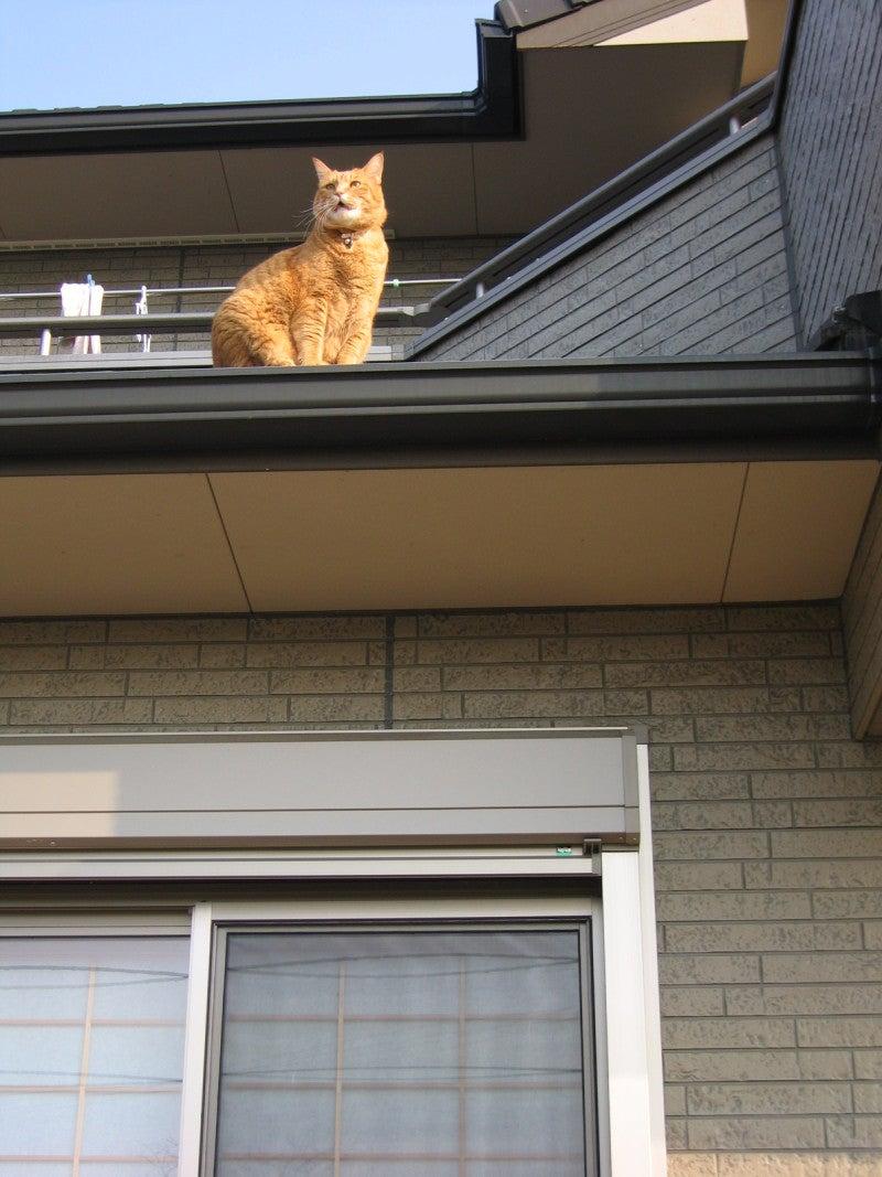 2008年 屋根の上のポンちゃん