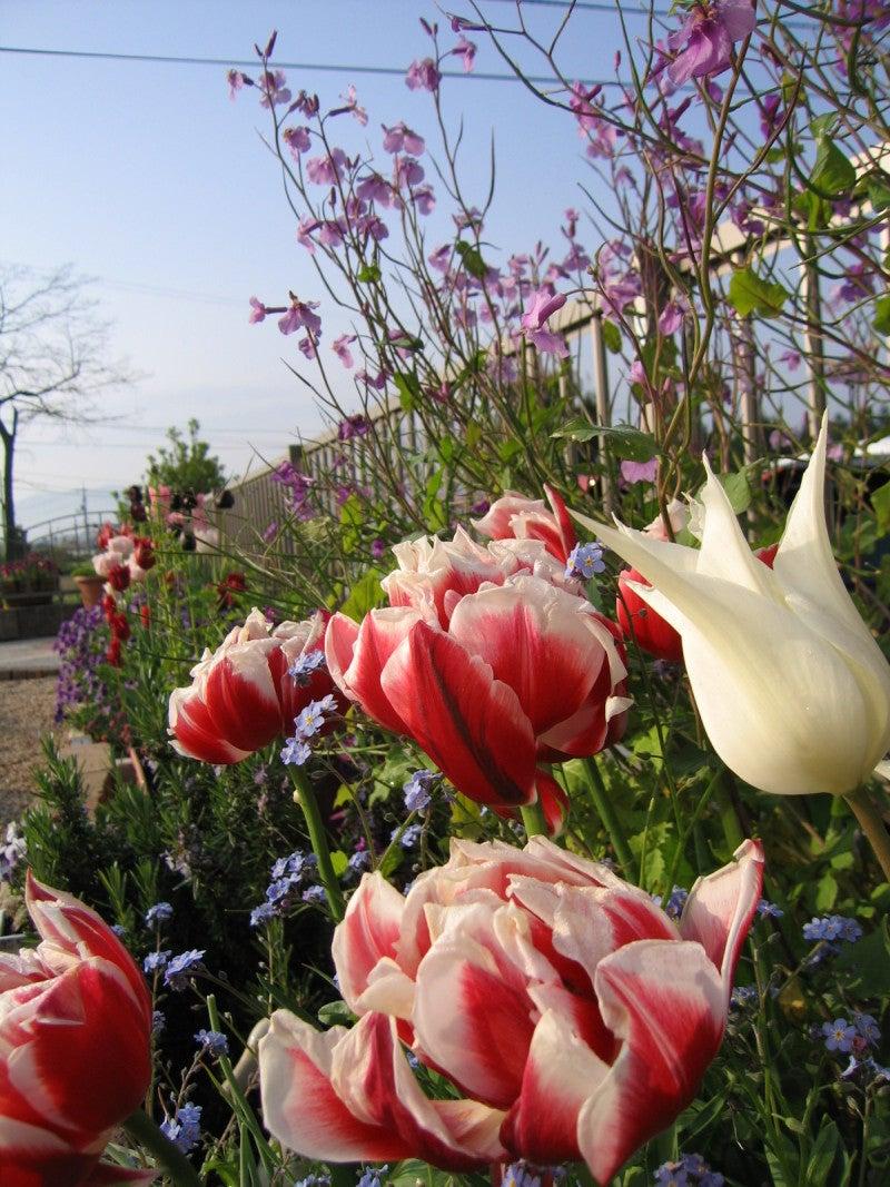 2008年 ガーデン