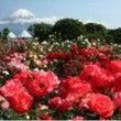 今日は駒沢フリマへ!…