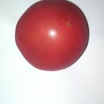 気比べの訓練 トマト