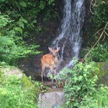 バンビの水遊び⁉︎