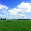 納豆の日☆(夏、納豆…