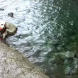 マーナちゃんの川遊び…