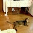 ネコとの遊びは全力で…