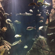 加茂水族館、何年振り…