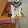 牛乳猫さんでアニマル…